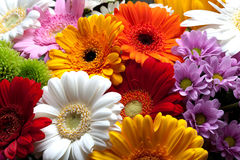 Colorful flowers blossom Stock Photography