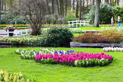 Colorful flowers blossom in dutch spring garden Keukenhof, Holland Stock Photo