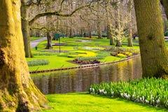Colorful flowers blossom in dutch spring garden Keukenhof, Holland Royalty Free Stock Photos