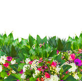 Colorful flowers border with freesia, anemone, rose, daisy, buttercup, isolated. On white background Royalty Free Stock Images