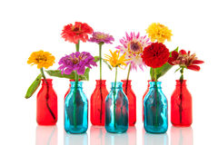 Colorful flowers in bottles Stock Photography
