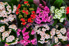 Colorful flowers in bouqets from a florist Stock Photos