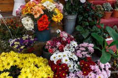 Colorful flowers in bouqets from a florist Stock Images