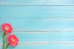 Colorful flowers bouquet on blue wooden background. Stock Image