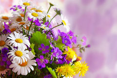 Colorful flowers  bouquet. Stock Image