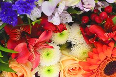 Colorful Flowers Bouquet Isolated on White Royalty Free Stock Photography