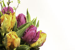 Colorful flowers. Colorful bouquet of tulips in in front of a white background Royalty Free Stock Image