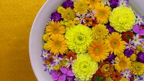 Colorful flowers in a bowl with water, spa therapy concept stock photography