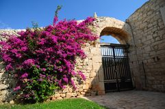Colorful flowers on building. Colorful purple flowers on exterior of Mediterranean villa building entrance stock image