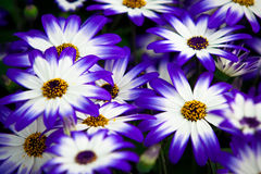 Colorful flowers. Close shot Royalty Free Stock Images