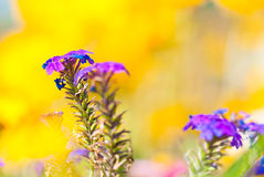 Colorful flowers Royalty Free Stock Photography