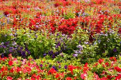 Colorful flowers picture. Colorful flowers close up picture Stock Images