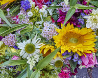 Colorful flowers closeup Stock Photos