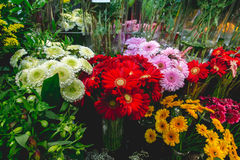 Colorful flowers in cold-box at flower market. Colorful flowers at flower market Stock Photography