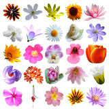 Colorful flowers collection background Royalty Free Stock Image