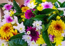 Colorful flowers. The color is bright. royalty free stock images