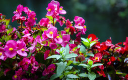 Colorful flowers Royalty Free Stock Image