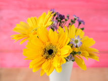 Colorful flowers with colorful backgrounds as well. Royalty Free Stock Images