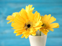 Colorful flowers with colorful backgrounds as well. Stock Photography