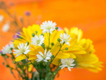 Colorful flowers with colorful backgrounds as well. Royalty Free Stock Photos