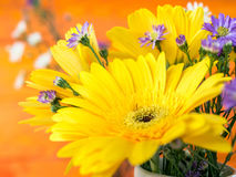 Colorful flowers with colorful backgrounds as well. Stock Photos