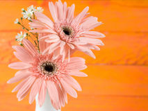 Colorful flowers with colorful backgrounds as well. Royalty Free Stock Photography