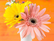 Colorful flowers with colorful backgrounds as well. Royalty Free Stock Photo