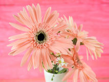 Colorful flowers with colorful backgrounds as well. Stock Photo