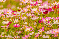 Colorful flowers 18 Stock Image