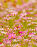 Colorful flowers 15 Stock Image