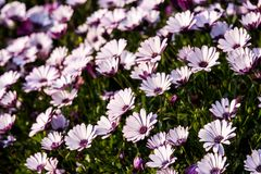 Colorful flowers in depth of field. Colorful flowers in depth of field Stock Photography
