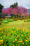 Colorful flowers design in garden Stock Photography