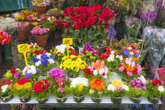 Colorful flowers on display on a market Royalty Free Stock Images