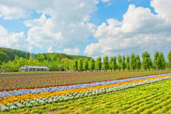 Colorful flowers field Stock Photo