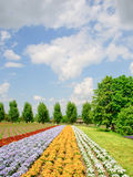 Colorful flowers field Stock Photography