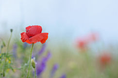 Colorful flowers on field Royalty Free Stock Image