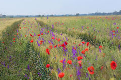 Colorful flowers on field Royalty Free Stock Photo