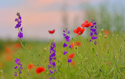 Colorful flowers on field Stock Photo