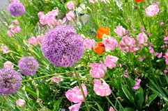 Colorful flowers. Flower bed with beautiful spring flowers Royalty Free Stock Photography