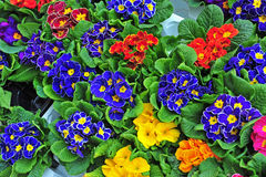 Colorful flowers the flower market Royalty Free Stock Photography