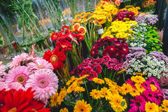 Colorful flowers at flower market. Green yellow red Stock Photography