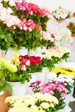 Colorful flowers in a flower shop. On a market Stock Photos