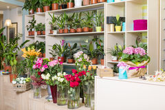 Colorful flowers in a flower shop on a market stock image