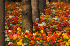 Colorful flowers in forest. Colorful flowers are blooming in forest Stock Photos