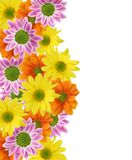 Colorful flowers frame royalty free stock images