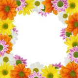 Colorful flowers frame Stock Photo