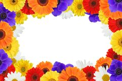 Colorful flowers frame stock photography