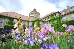 Colorful flowers in front of Botanic Institute of Munich Botanical Garden Royalty Free Stock Images