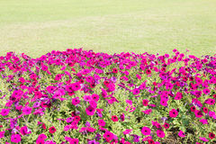 Colorful flowers on garden Stock Images
