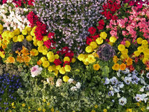 Colorful flowers. In the garden Stock Images